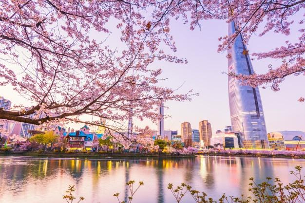 Cheap Last Minute Business Class Flights to Seoul 2